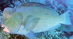 20070930BuffaloFish.jpg