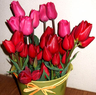 Tulip%E8%A4%87%E8%A3%BD.jpg