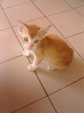 マレーシアには猫ばかり